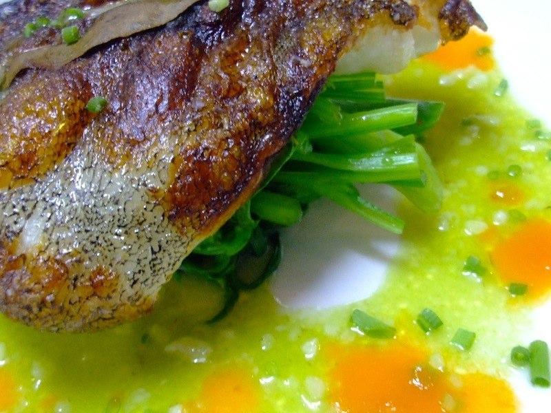 鹿児島 長島港直送  石鯛のマリネのポワレ 自家製塩麹とふきのとうのソースベルジュ 春のほろ苦い青味野菜を添えて
