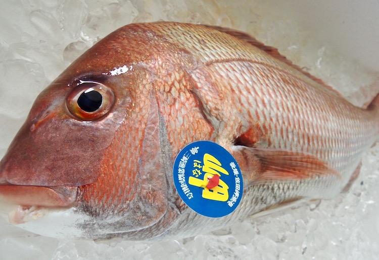 天然真鯛 漁師さん直送の一本釣り鮮魚