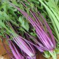 野菜料理の基礎|野菜に含有する毒素。その抜き方について。
