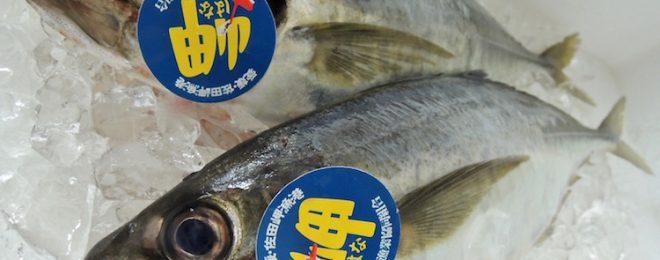 天然真鯵 漁師さん直送の一本釣り鮮魚