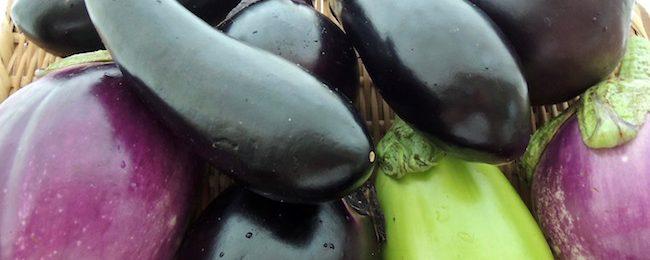 茄子 炭素循環農法