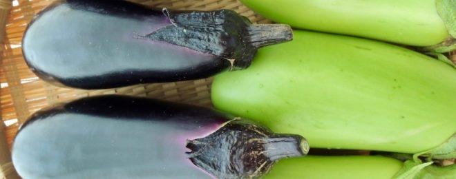 自然農法 炭素循環農法 茄子