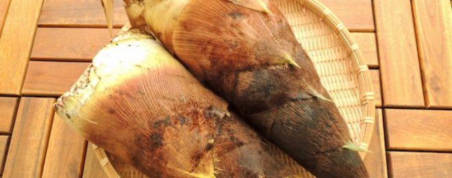 タケノコ 季節の食材