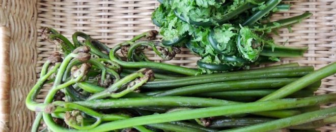 わらび こごみ 季節の山菜