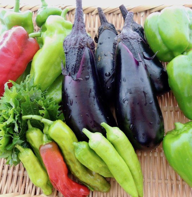 レストランチッチ農園の自然農の野菜