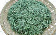 柿の葉茶 これから蒸します。