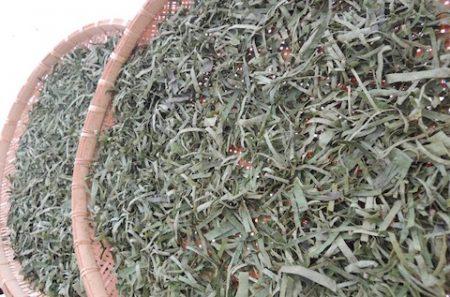 柿の葉茶 蒸しあがり