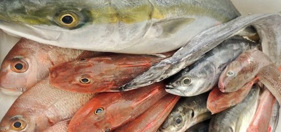高知の魚たち