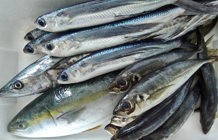 漁師直送鮮魚