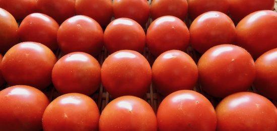 朝採りトマト 2019