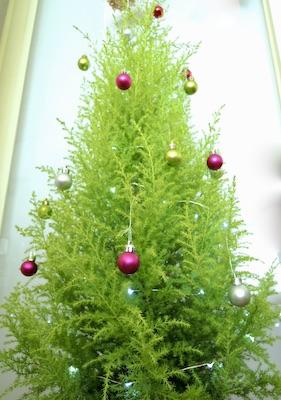 生木のツリー クリスマス