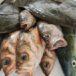 北海道 活魚
